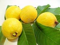 13809812-exotico-guayaba-amarilla-desde-hawai-con-greeen-deja-en-el-fondo-blanco
