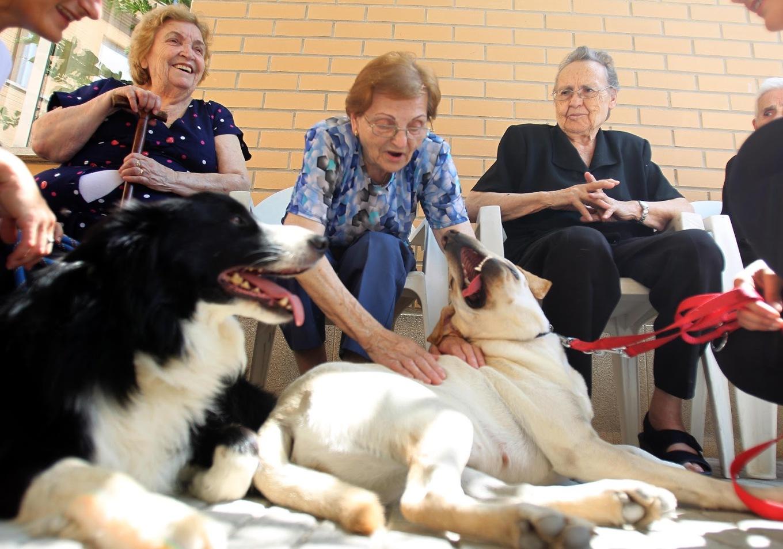 perros y adultos mayores