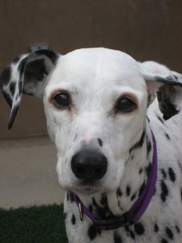 dog dementia, leaving body soon