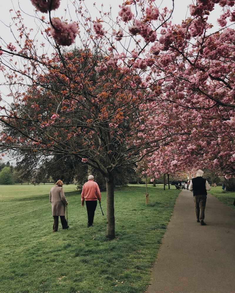 people walking near trees
